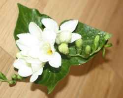Butten Hole Flower - X36