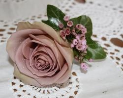 Pink Buttonholse BH24