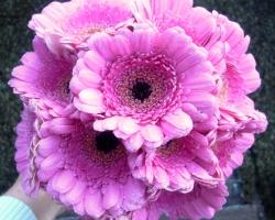 Cerise Flower - FG23