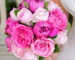 Pink English Roses - B66