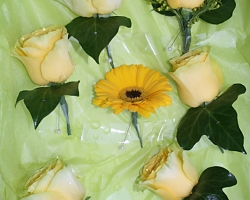Yellow Buttonholes - BH34