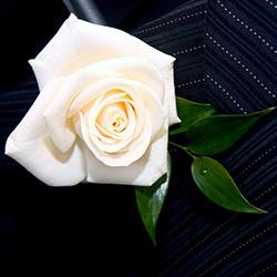 Flowers for Buttonholes